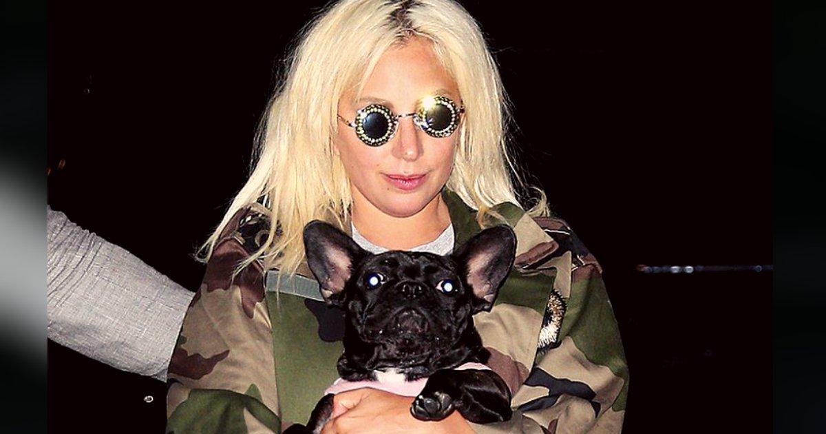 titulo 28 3.png?resize=1200,630 - Lady Gaga Ofrece $500Mil Dólares A Quien Le Devuelva A Sus Mascotas Después Que Un Ladrón Se Los Llevó