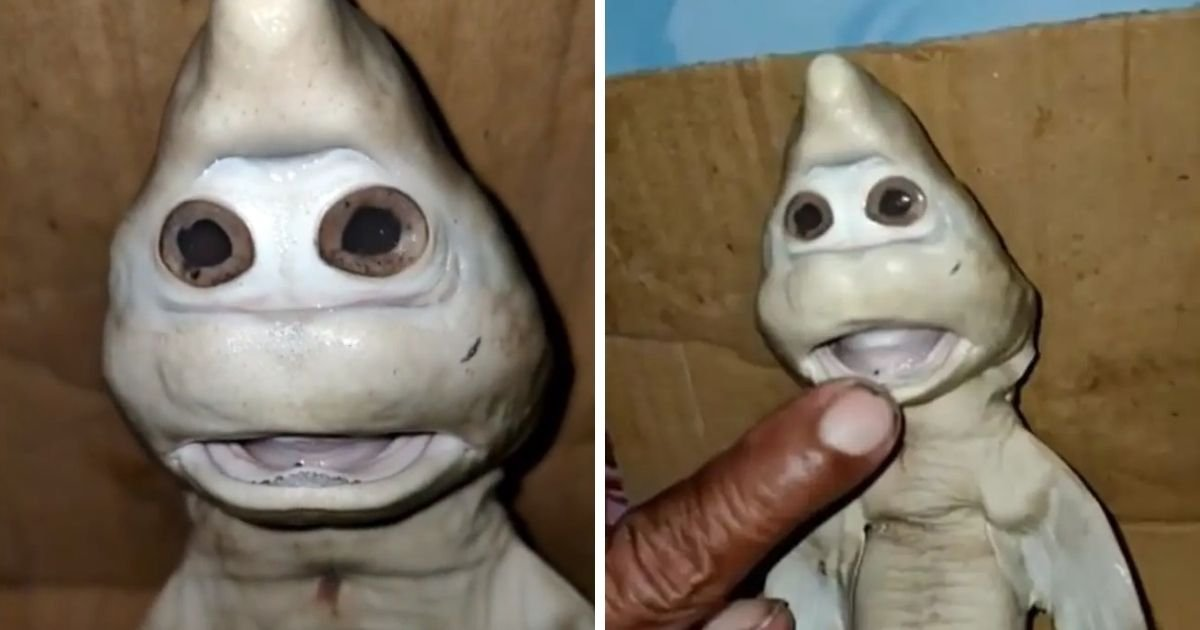untitled design 1 10.jpg?resize=412,232 - Mutant Baby Shark With 'Human Face' Found By Fisherman Inside Another Shark