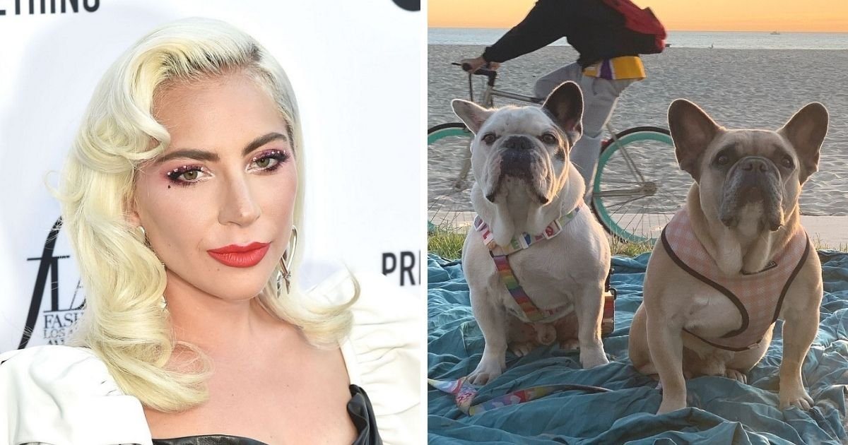 untitled design 3 9.jpg?resize=412,232 - Lady Gaga Breaks Silence And Pays A Tribute To Her Dog Walker After Her Bulldogs Get Snatched