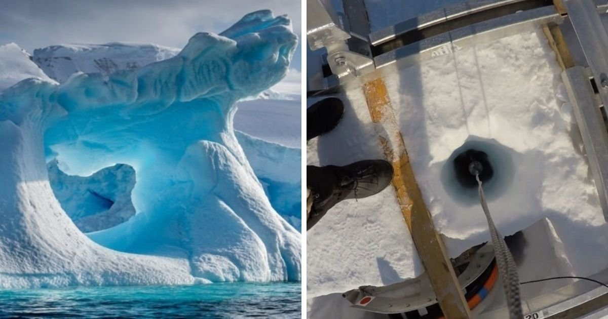 untitled design 5 6.jpg?resize=1200,630 - New Animal Species Is Discovered In The Icy Waters Underneath Antarctica