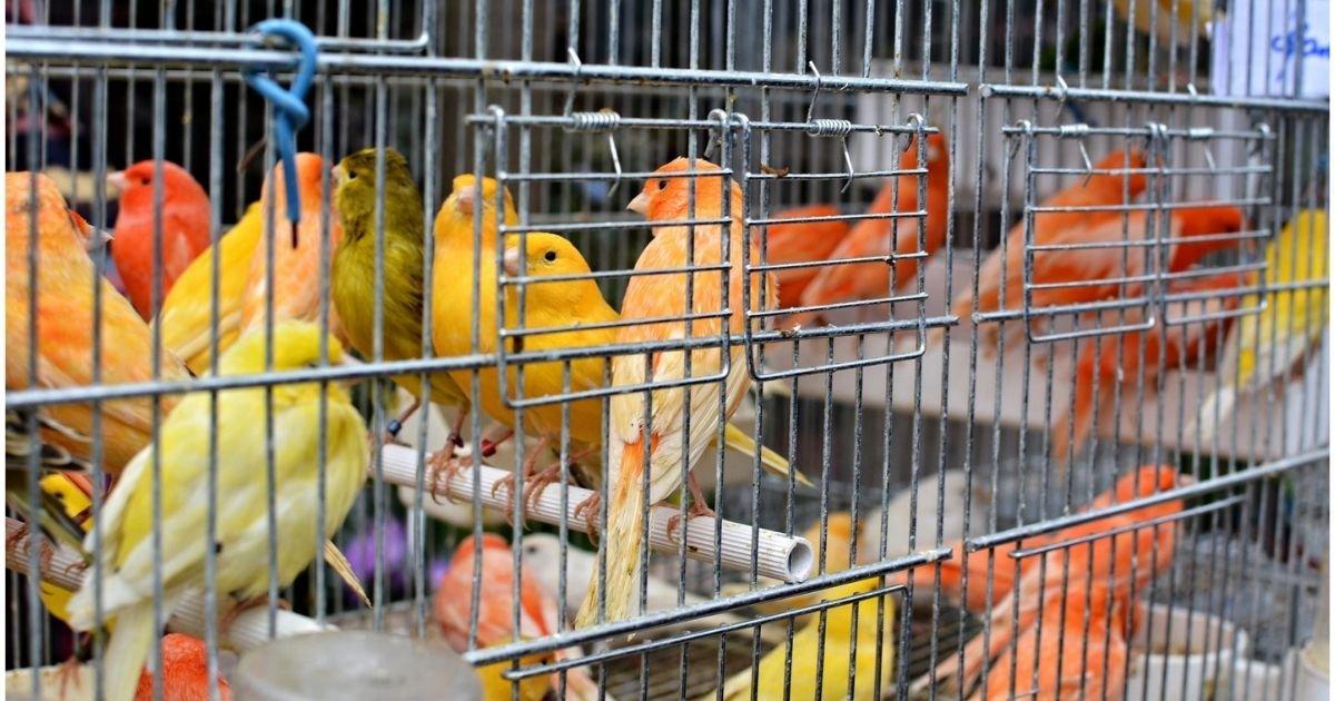 vonjour13.jpg?resize=1200,630 - Paris : fermeture du marché aux oiseaux sur l'île de la Cité