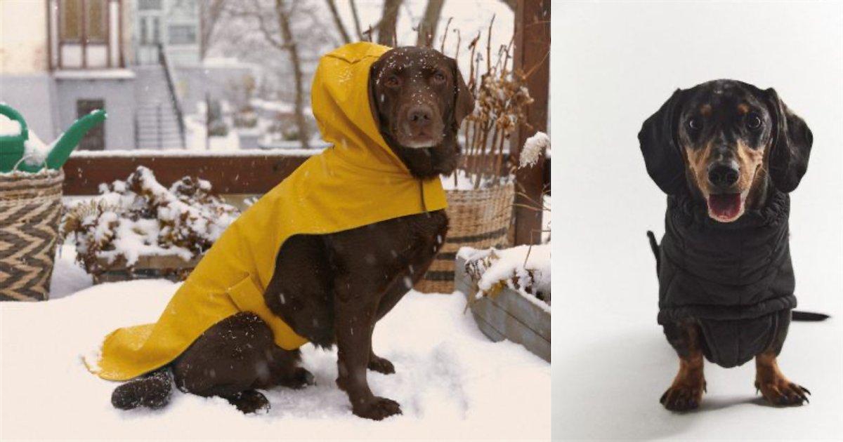 zara.png?resize=1200,630 - Zara lance sa toute première collection de vêtements pour chien