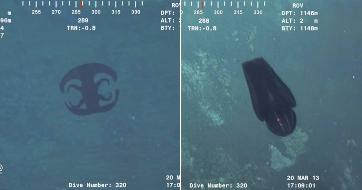 1 125.jpg?resize=1200,630 - Alien-like Creature Transforms Itself 3,700ft Deep in Indian Ocean