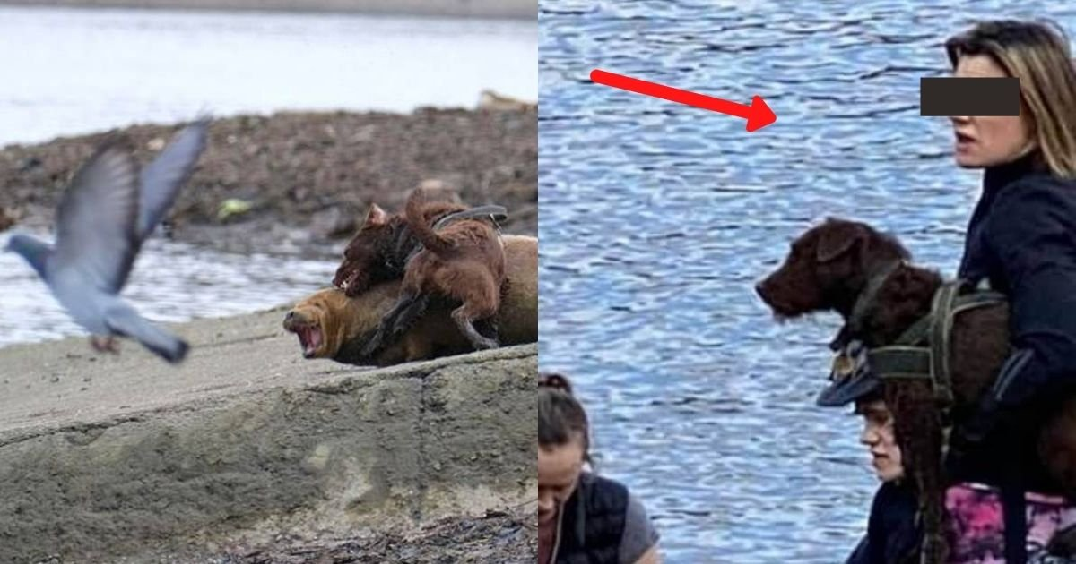 1 130.jpg?resize=412,232 - Police Hunts Owner Of Unleashed Dog Who Savagely Attacked Freddie The Seal