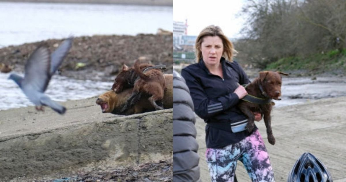 1 147.jpg?resize=1200,630 - Lawyer Whose Dog Savagely Attacked Freddie The Seal Will Not Face Any Criminal Charges