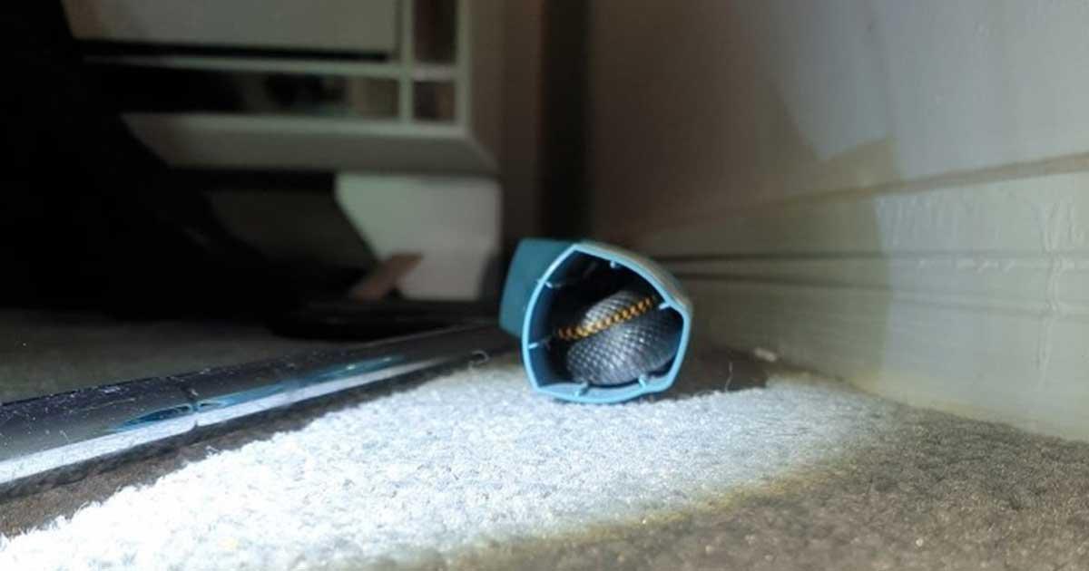 156598797 2784774541774323 5856335178726837834 n.jpg?resize=412,232 - Australian Teen Finds Deadly Snake Hiding Inside Her Inhaler