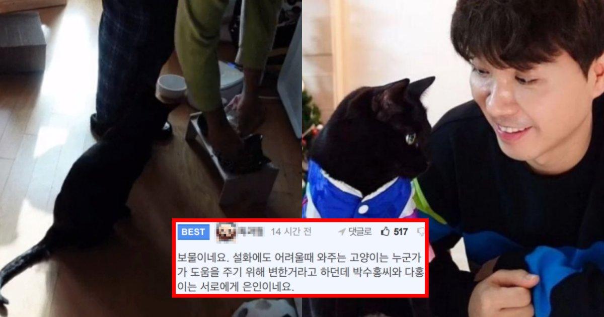 "collage 190.png?resize=1200,630 - ""이 정도면 상위 0.1%""… 박수홍네 고양이 '다홍이'가 천재 고양이로 불리는 이유"