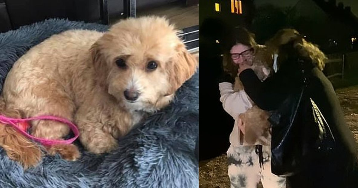 dog thumbnail.png?resize=412,232 - Maltipoo Snatched By Thieves, Reunited With Tearful Owner