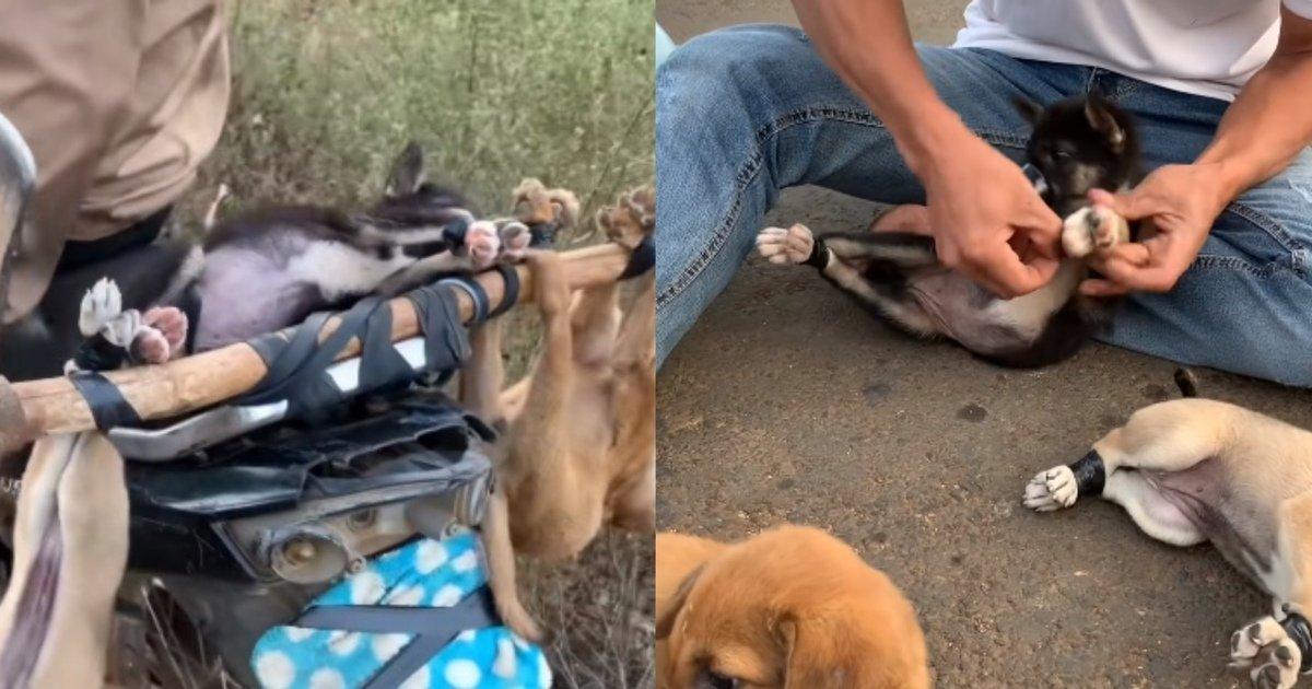 eab095ec9584eca780 1.jpg?resize=1200,630 - 오토바이에 강아지들을 매달고 달리는 주인에게서 강아지들을 구조한 남성(+영상)