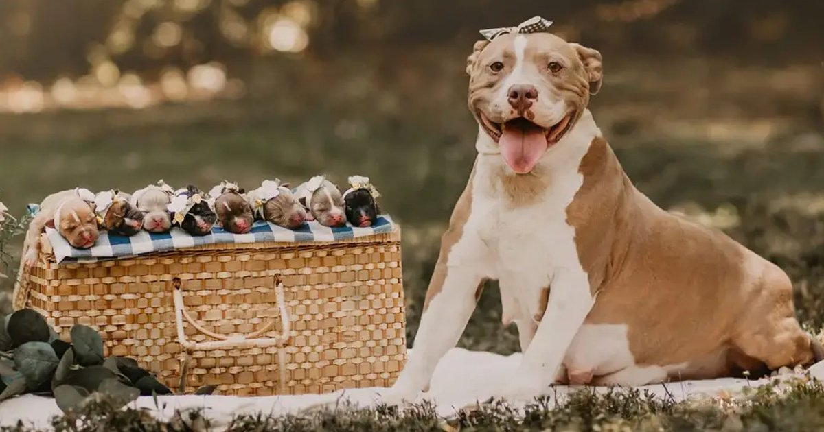 eerrrwerwr.jpg?resize=1200,630 - This Pregnant Dog Photoshoot Is Everything You Need To See Today