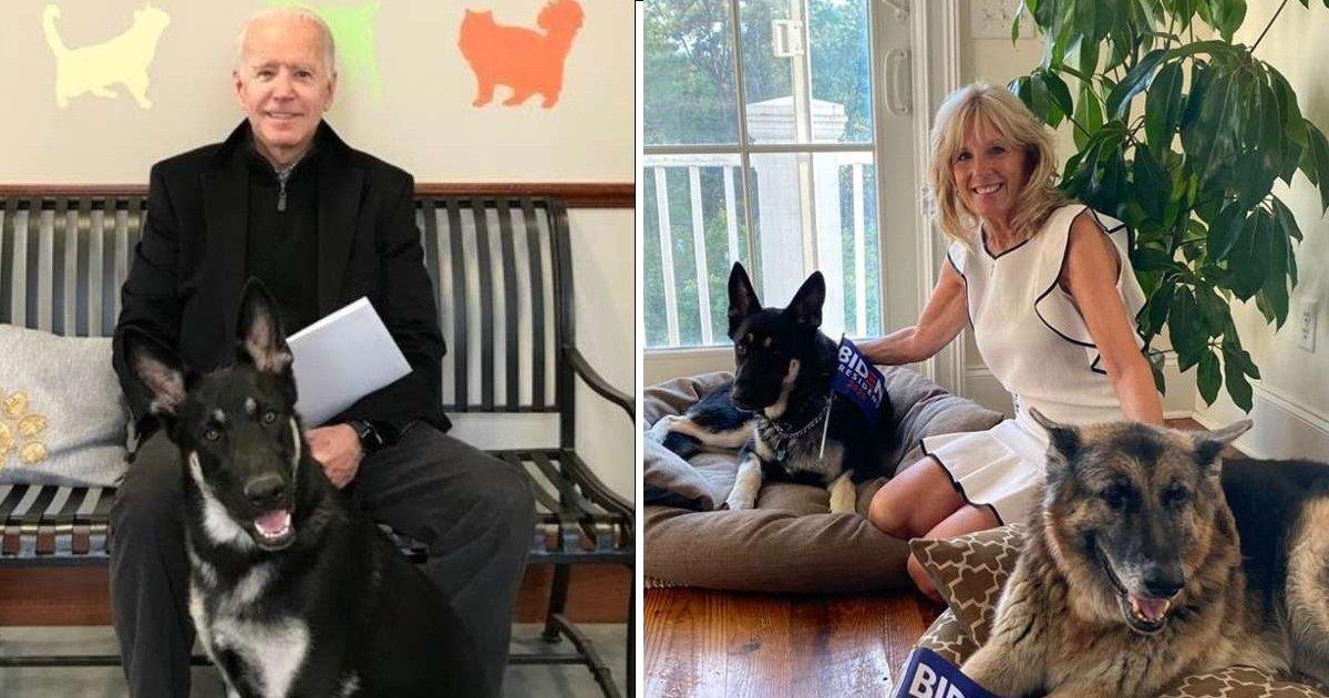 gggggsg.jpg?resize=412,232 - President Biden's Dogs Taken Back To Family Home After 'Biting' Security Guard
