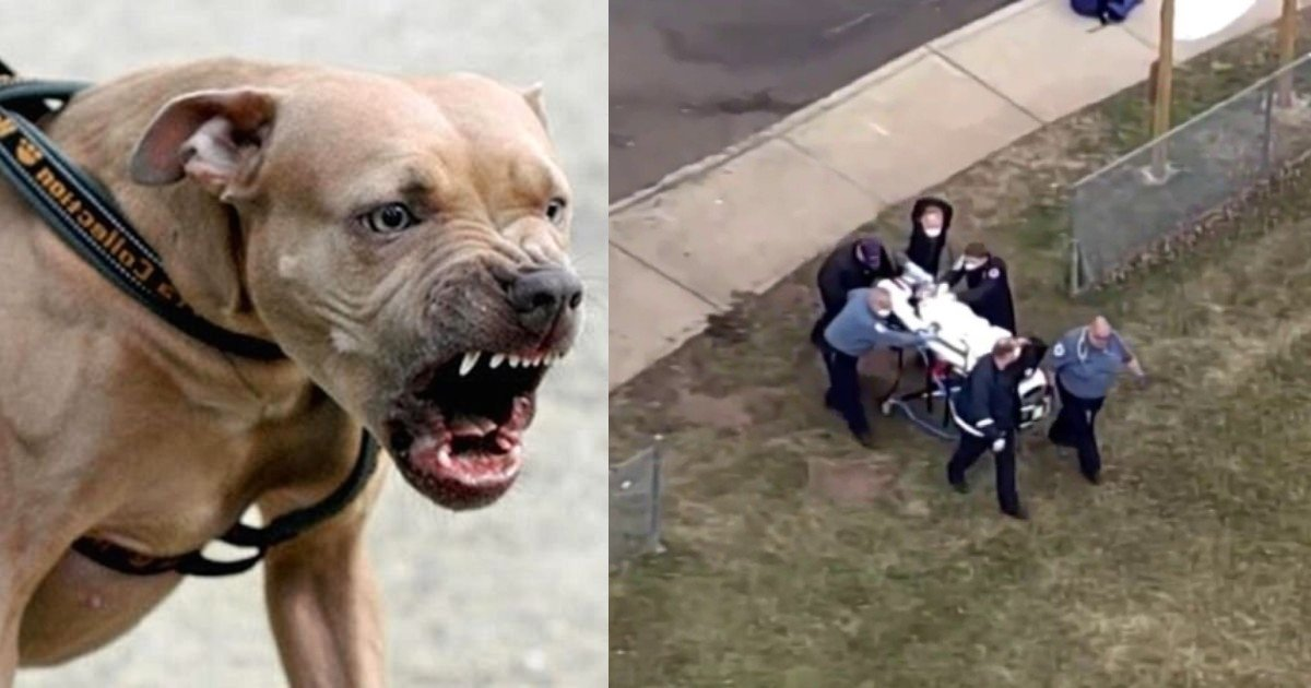 ghjf 30 2.jpg?resize=1200,630 - 3-Year-Old Boy Dies After Getting Mauled By Neighbor's Dogs While Playing At His Home