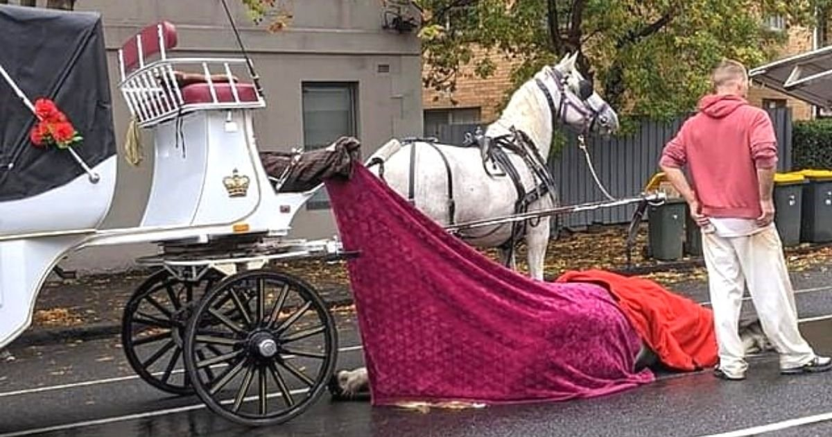 horse5.jpg?resize=412,232 - Horse Tragically Died After Collapsing On The Street While Pulling A Carriage