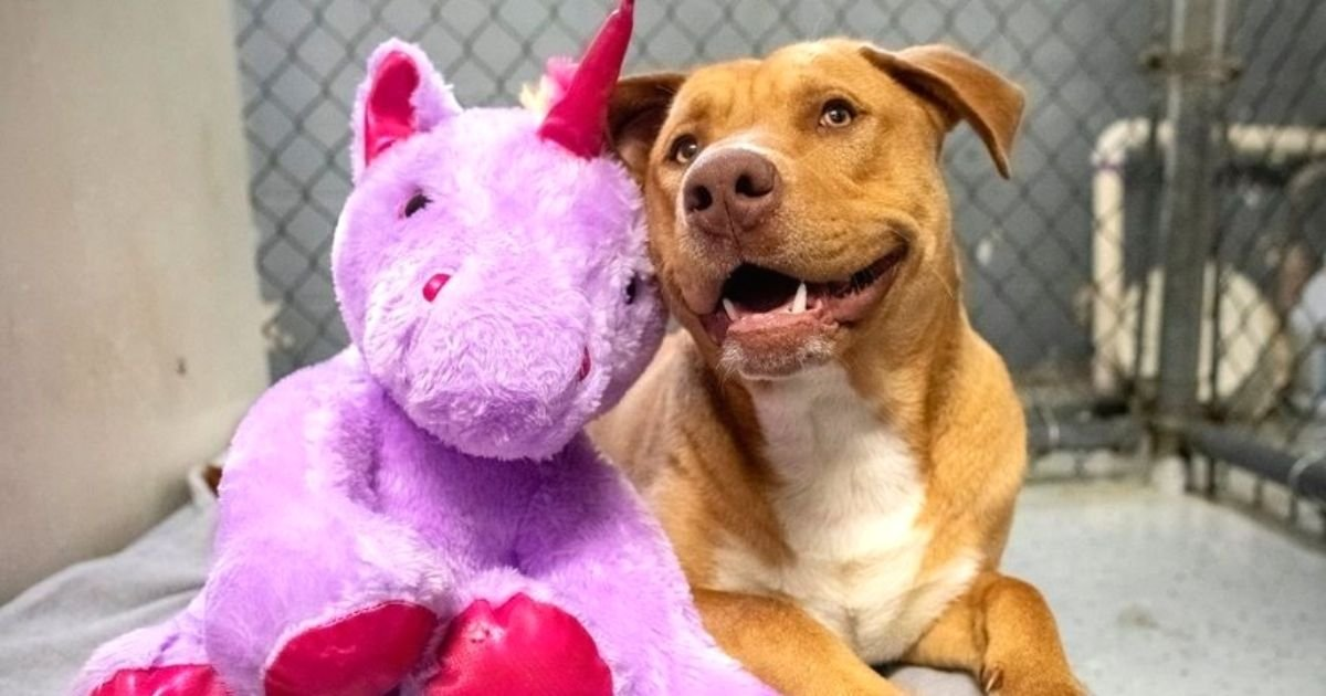 sisu5.jpg?resize=412,232 - Stray Dog Who Repeatedly Stole Purple Unicorn Has The Stuffed Toy Bought For Him By Animal Control Officers