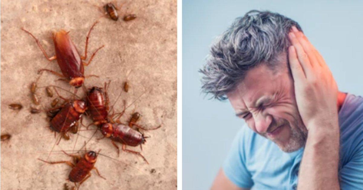 titulo 11.png?resize=1200,630 - Hombre Que Se Quejaba De Dolor De Oído Tenía Toda Una Familia De Cucarachas Viviendo En Su Canal Auditivo