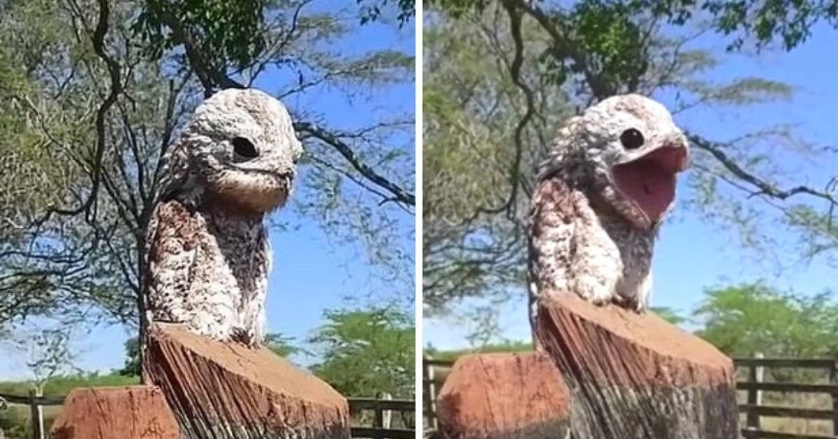 untitled design 43.jpg?resize=412,232 - Woman Terrified After Spotting Bizarre 'Ghost Bird' With Massive Mouth