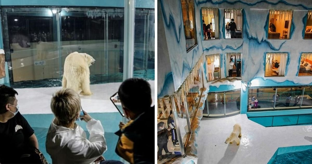untitled design 9 2.jpg?resize=412,232 - 'Cruel' Hotel Slammed For Displaying Polar Bears In A Tiny Enclosure '24 Hours A Day'