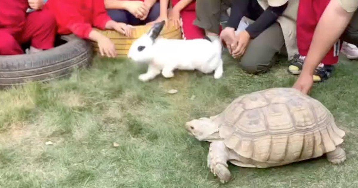 6 45.jpg?resize=1200,630 - 토끼와 거북이를 경주시켰더니, '깜짝' 놀랄 결과 나왔다 (영상)