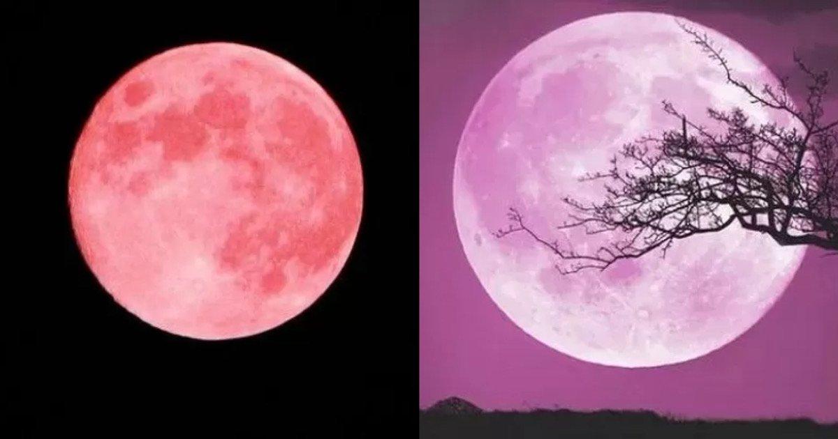 9f44c850 701e 402a bbad 78009f408ed6.jpeg?resize=1200,630 - 오늘 (27일) 드디어 검은 밤하늘에 더 밝고 큰 올해 첫 '핑크 슈퍼문' 뜬다