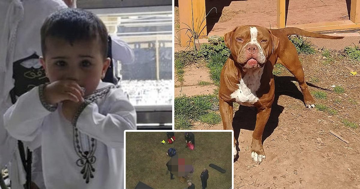 errreee.jpg?resize=1200,630 - New Jersey Prosecutors DECLINE To File Charges Against Pit Bull Owner Who Mauled 3-Year-Old Boy To Death & Injured His Mum