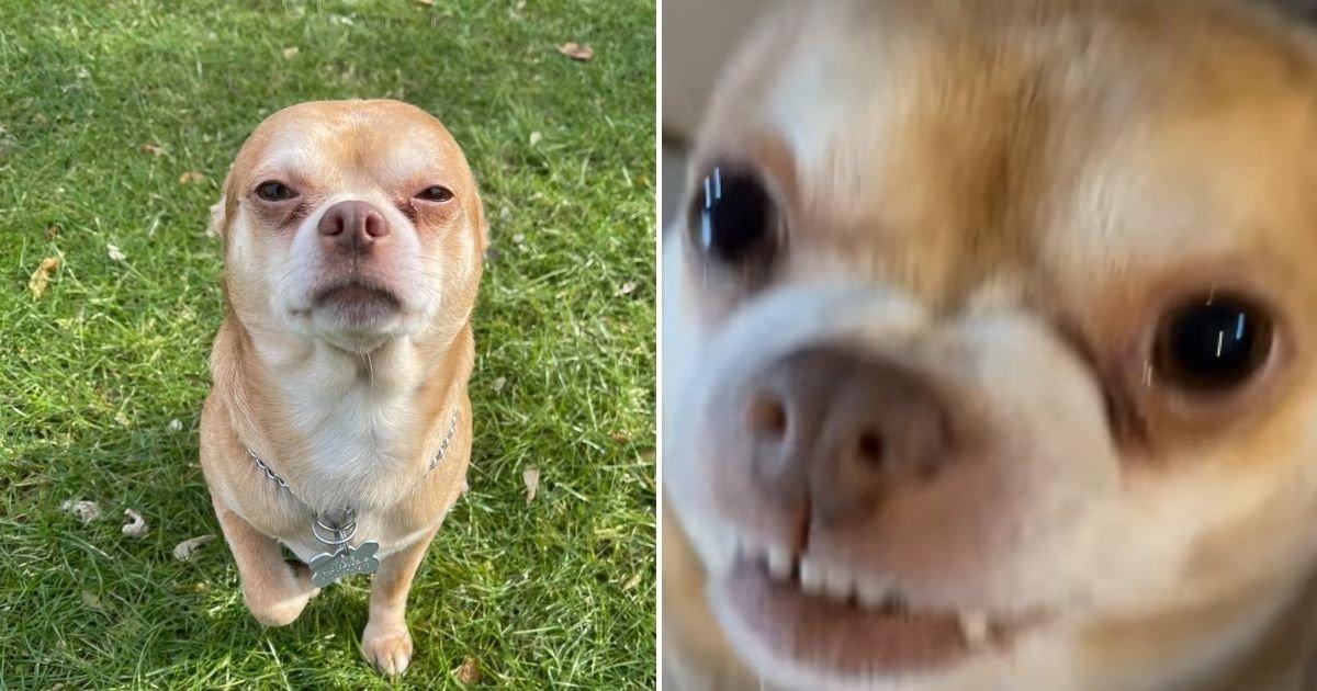 prancer7.jpg?resize=412,232 - Foster Owner Looking For A Forever Home For 'Hateful' Dog Goes Viral Thanks To Her Brutally Honest Description