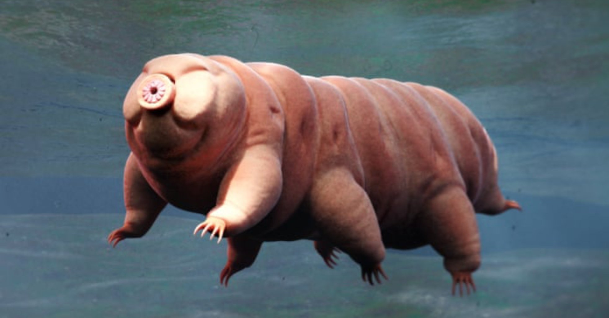 sus.jpg?resize=1200,630 - 10 of the World's Strangest Animals You Have Never Seen Before