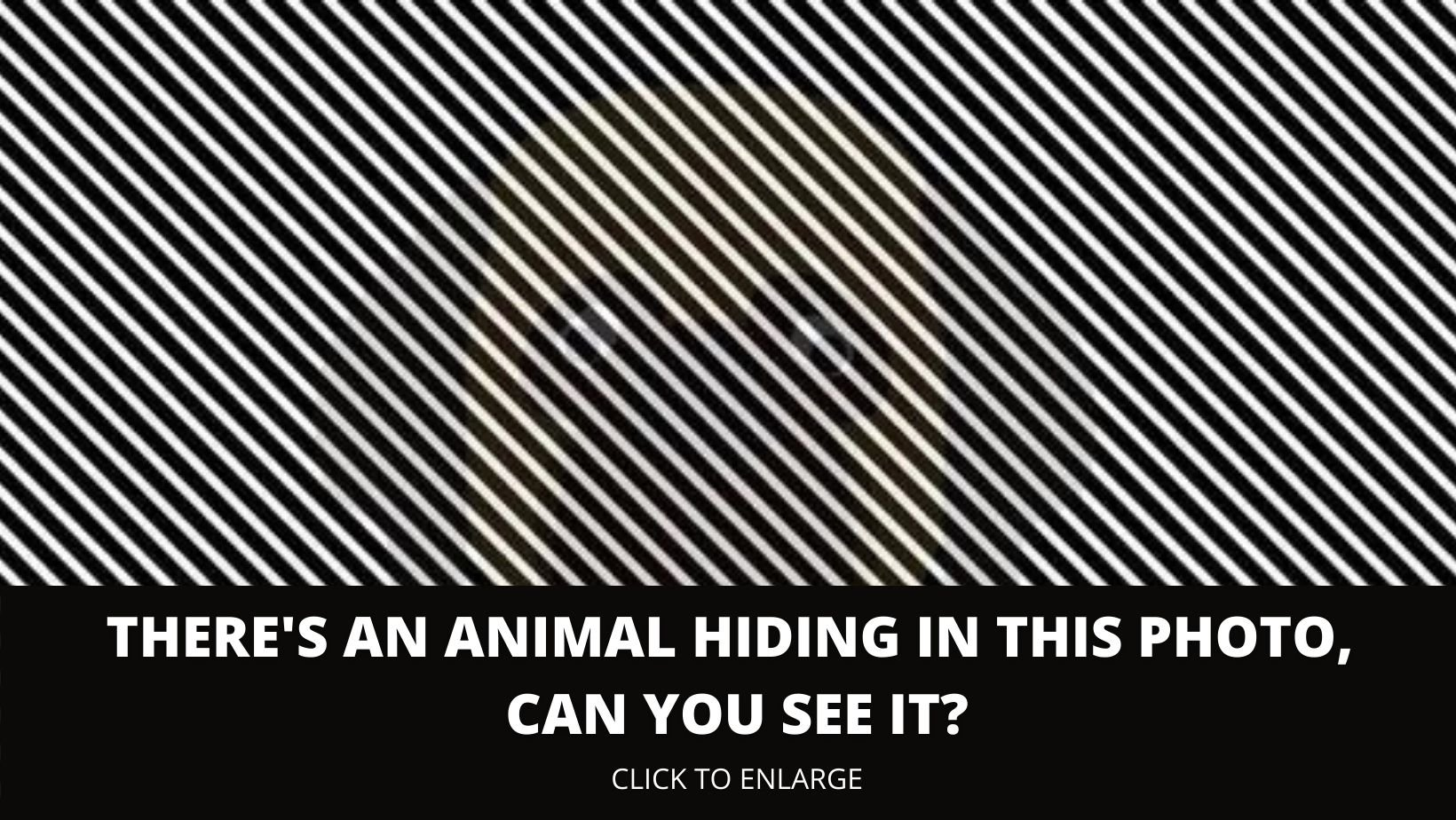 1 167.jpg?resize=412,275 - There's An Animal Hiding In This Optical Illusion, Can You See It?