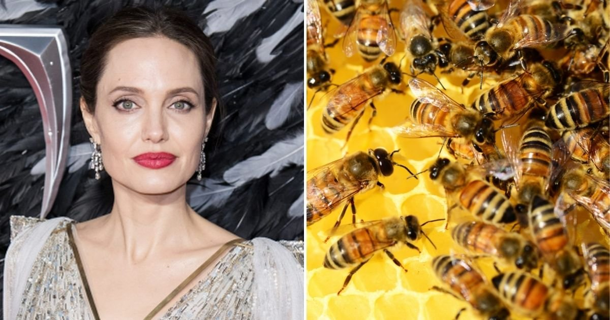 bees5.jpg?resize=412,232 - Angelina Jolie Gets Swarmed By Bees After She Skipped Showers For THREE Days