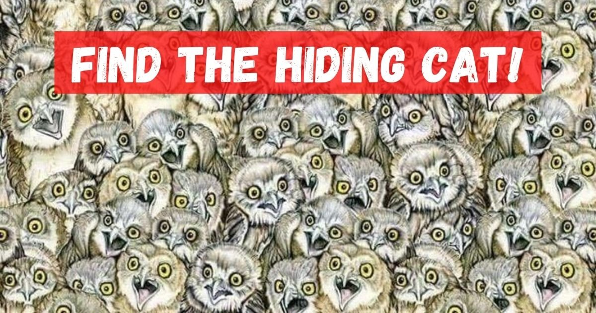 can you spot the cat.jpg?resize=412,232 - Can YOU Find The Sneaky Cat That Is Hiding Among The Owls In This Picture