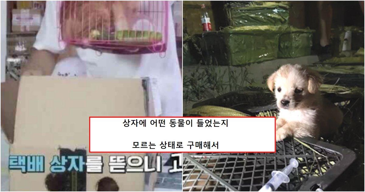 collage 399.png?resize=1200,630 - 하다하다 이제 동물들을 랜덤 박스로 배송해버리기 시작한 업체