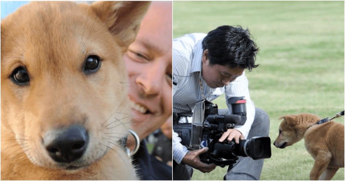 collage 487.png?resize=1200,630 - 어떤 개보다 똑똑하고 충성심이 강한 한국의 진돗개를 미국 경찰견으로 키우자 생긴 충격적인 일