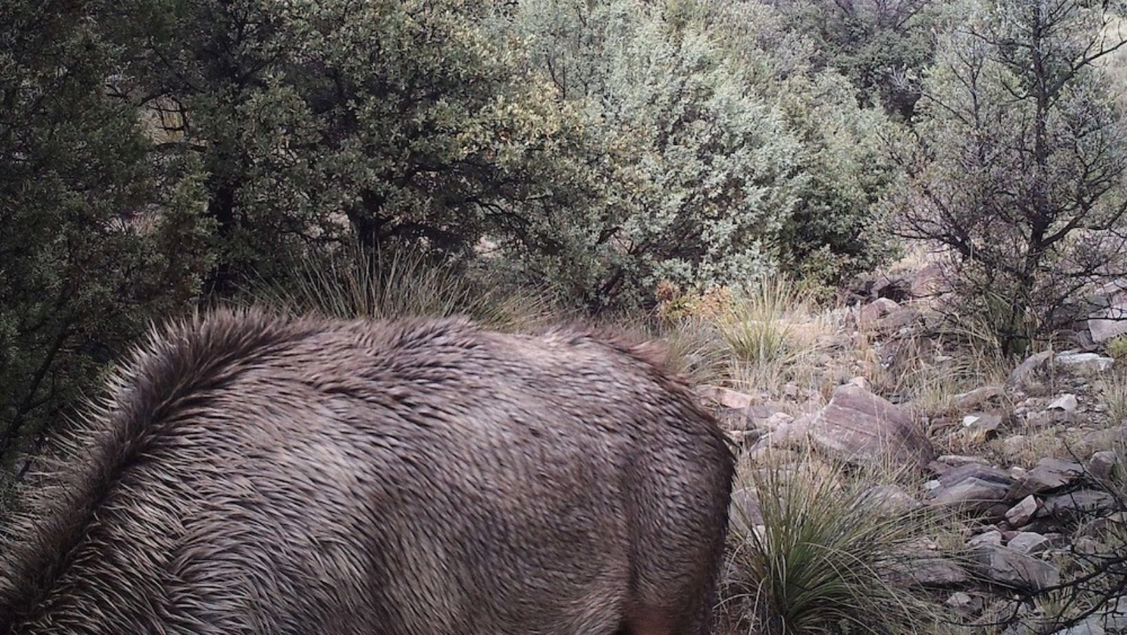 courtesy of the rio mora national wildlife refuge.jpg?resize=1200,630 - There Is A Mountain Lion In This Photo, Can You Spot It?
