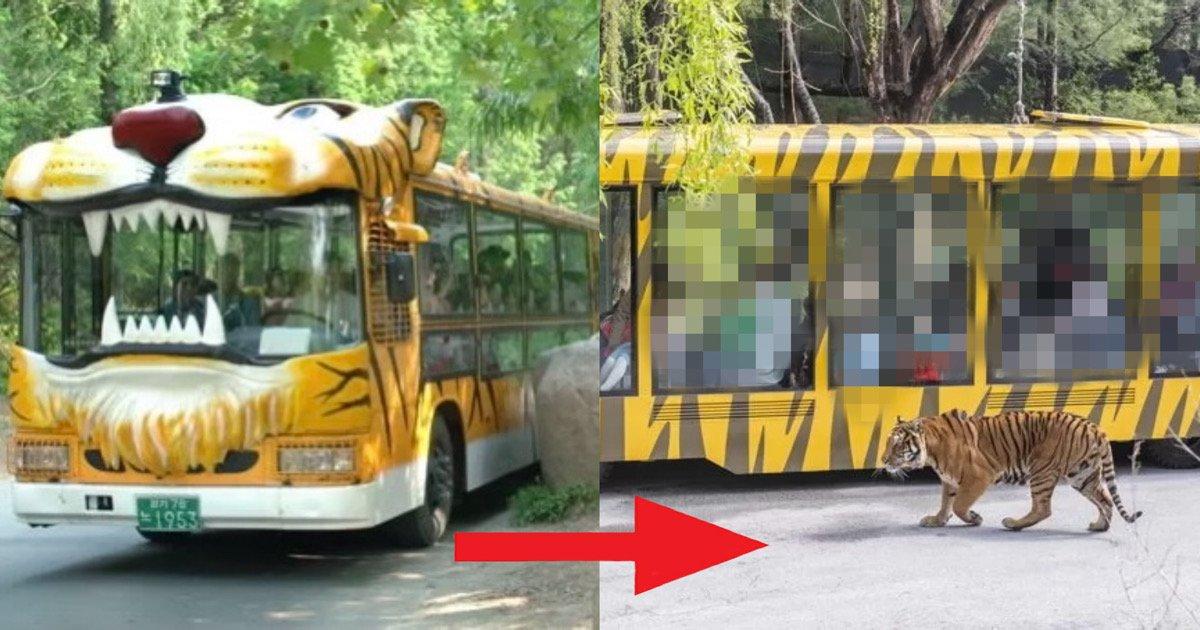 """d81f26f2 b2a9 4f11 b411 f0f327eca554.jpeg?resize=1200,630 - """"대박 이러려고 사파리 버스 없앴네""""…버스보다 훨씬 스케일 커져 당장 타고싶어지는 '사파리 트램' 클라스"""