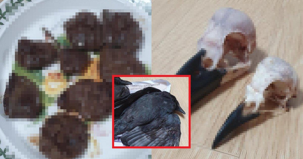 eab98ceba788eab780ec8db8.png?resize=412,275 - 【閲覧注意】「カラス」を捕まえて直接料理・試食に挑んだ衝撃的な人物(画像あり)