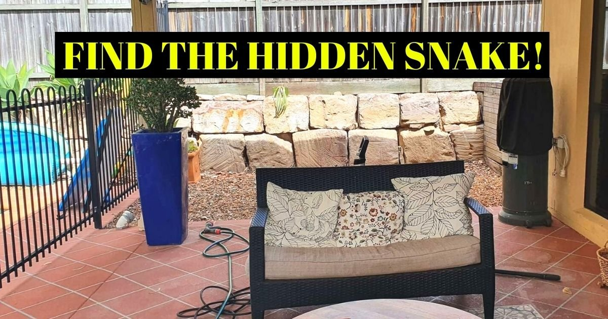 find the hidden snake.jpg?resize=1200,630 - There Is A Very Dangerous SNAKE Hiding In This Family's Backyard - But Can You Spot It?
