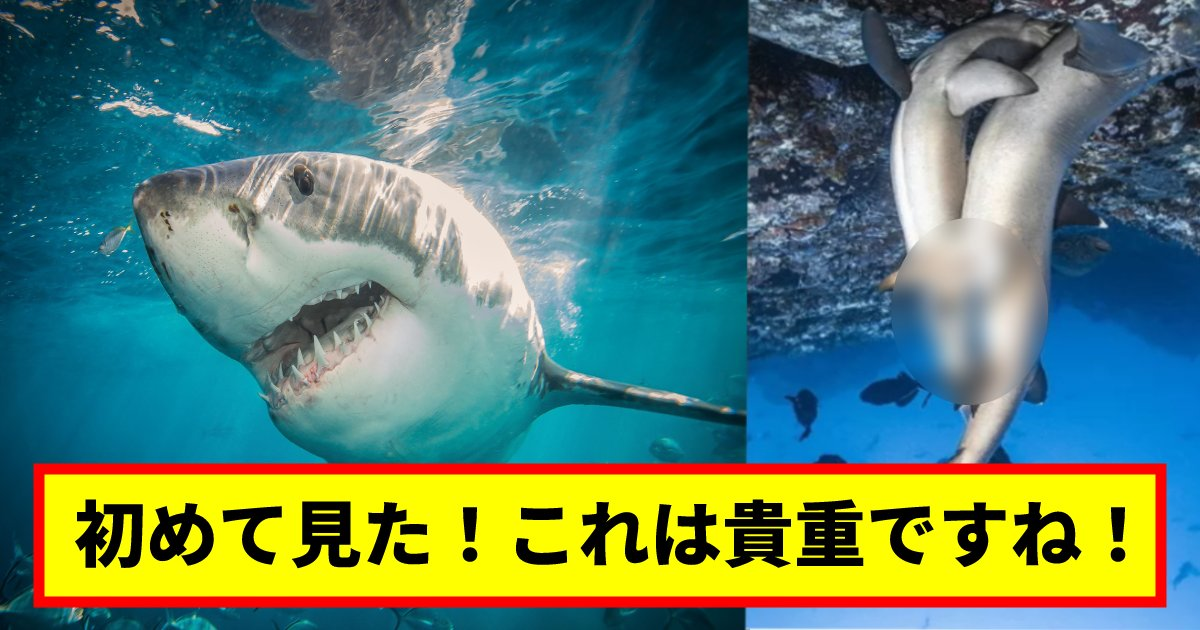 """same.png?resize=1200,630 - 【衝撃】 偶然撮影された、激しい""""サメ""""の交X姿がとんでもなかった!? 「これは貴重すぎる!」"""