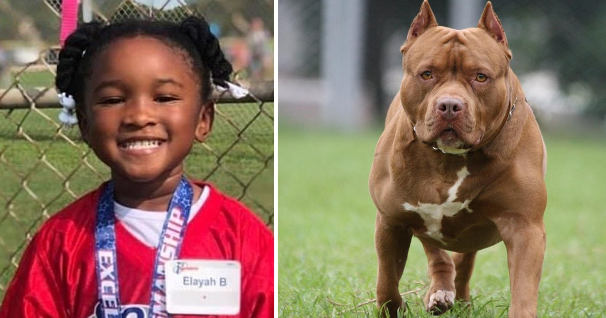 t8 9.jpg?resize=412,232 - 4-Year-Old Girl Viciously Mauled To Death By Family Dog In Her Own Backyard In Texas