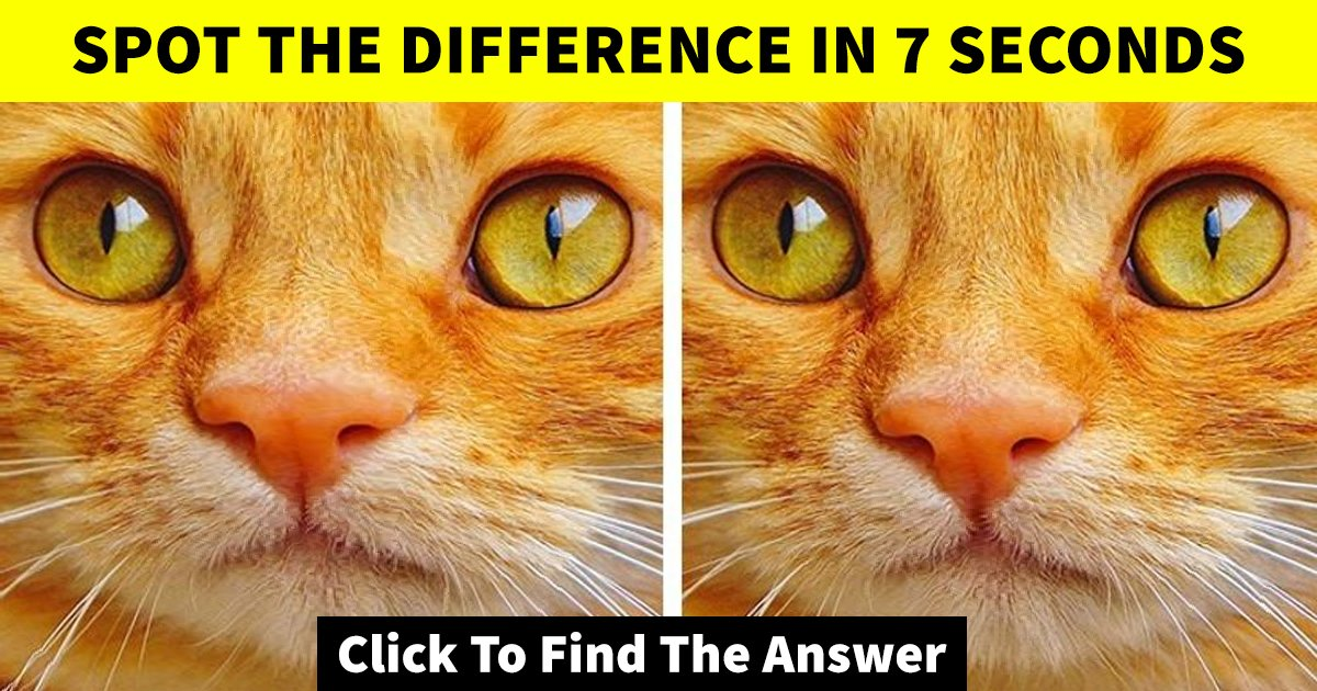 w1 19.jpg?resize=1200,630 - How Fast Can You Spot The Difference Between These Two Images?