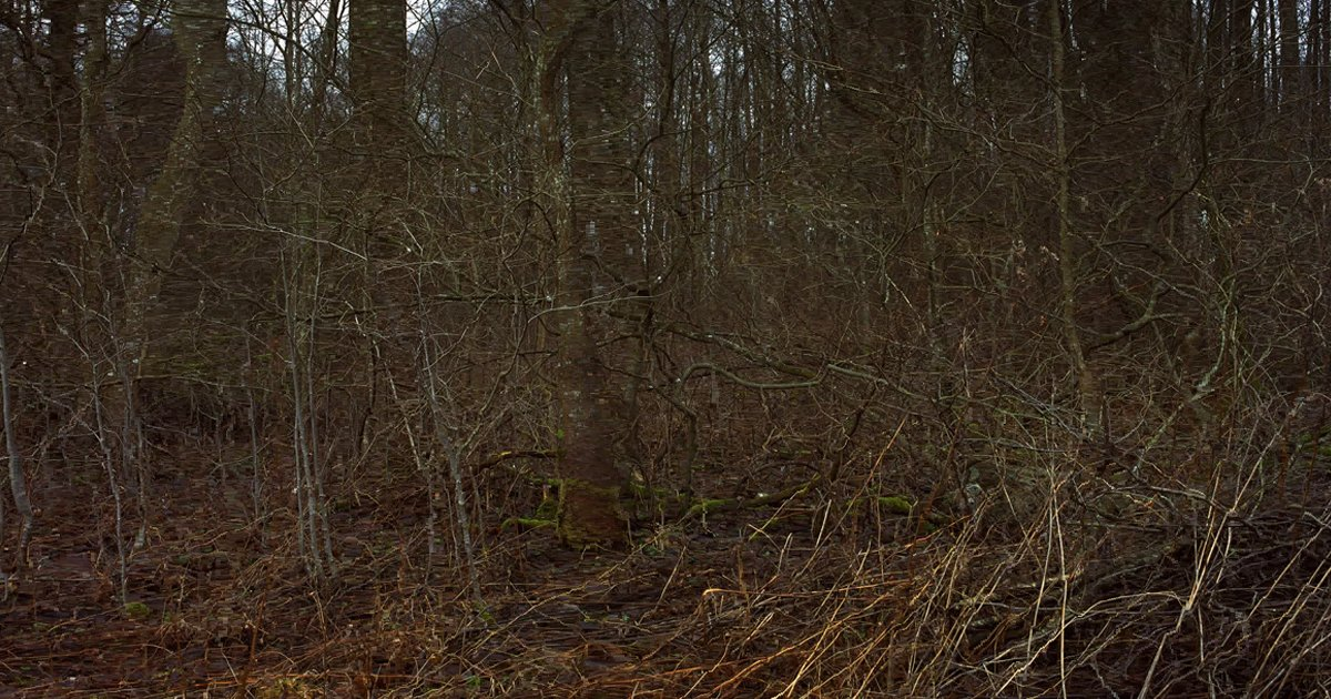 w33.jpg?resize=1200,630 - How Fast Can You Spot The Hidden Sniper In This Photo Challenge?