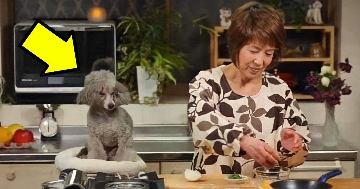 "3 98.jpg?resize=1200,630 - ""강아지와 요리?""... 이해하면 슬프다는 유튜버 사진.jpg"