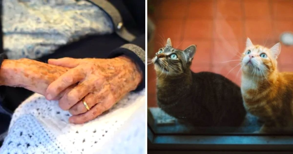 cats5.jpg?resize=1200,630 - Body Of An Elderly Woman Was 'Devoured From The Waist Down' By Her Cats