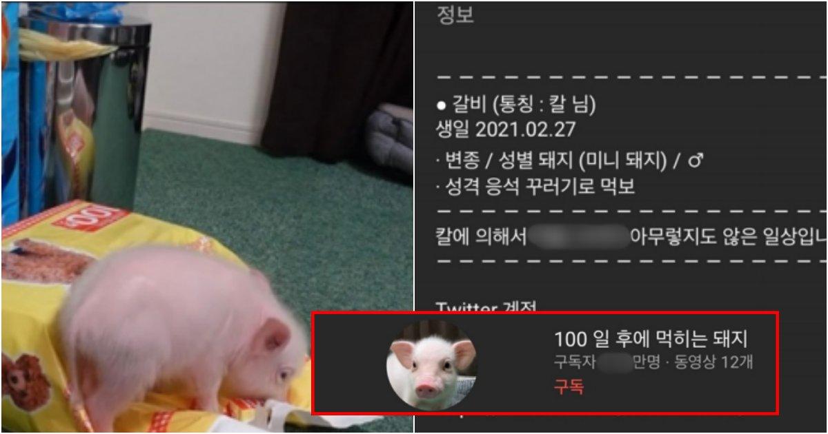 collage 119.png?resize=1200,630 - 직접 기른 돼지 100일 후에 잡아먹는 신개념 컨텐츠 진행중인 유튜버