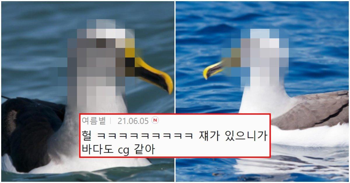 "collage 15.jpg?resize=412,232 - ""CG아니였어??""… 정말 컴퓨터 CG처럼 생겼다는 새 (+사진)"