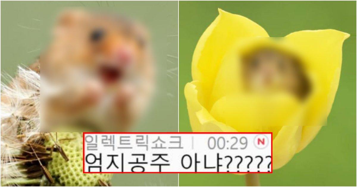 collage 245.png?resize=1200,630 - 의외로 한국 토종이라는 꽃가루 먹고 사는 7g짜리 쥐