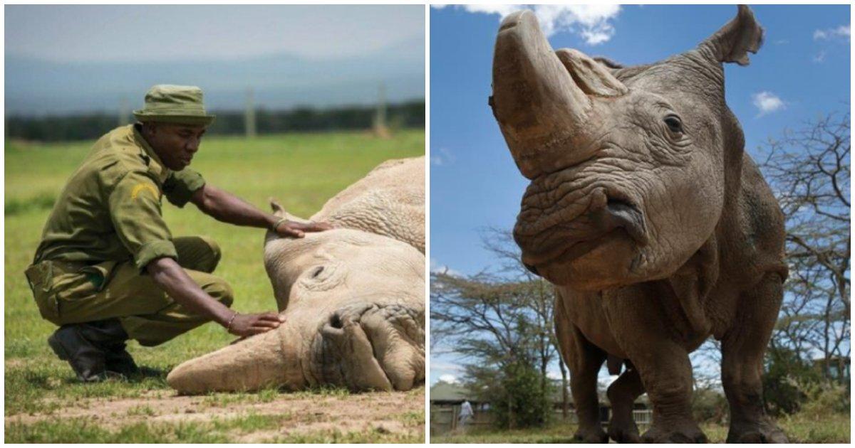 collage 96.png?resize=412,232 - つい最近、公式に絶滅してもう見ることができないという動物!?
