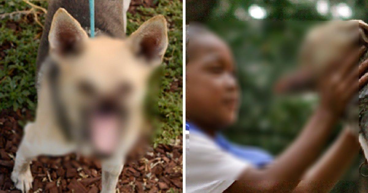 dog.png?resize=412,232 - 二人の子供を救って.....顔を半分失った子犬の話