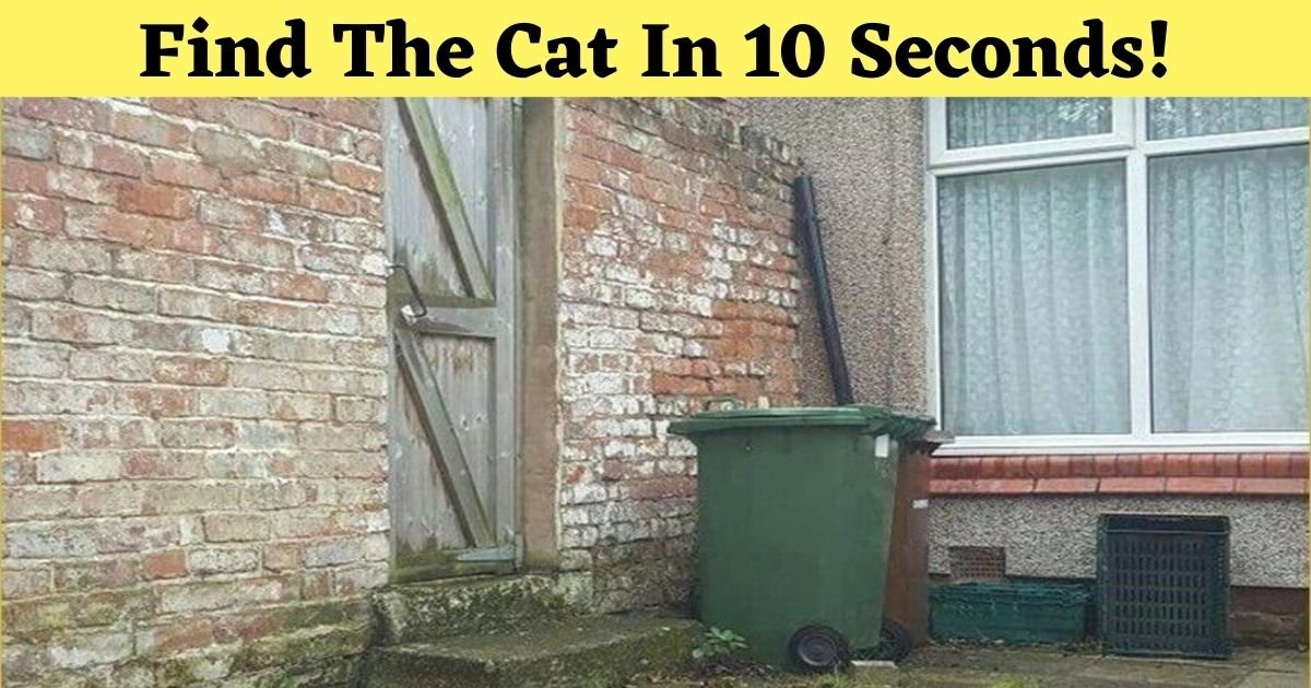 find the cat in 10 seconds.jpg?resize=1200,630 - Only 5% Of People Could Spot The Hidden Cat In This Picture! Do You See It?