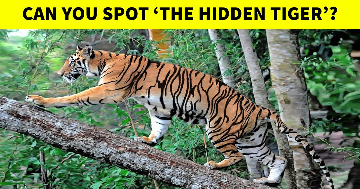 q2 21.jpg?resize=412,232 - This Optical Illusion Is Playing With People's Minds Online! Can You Solve It Correctly?