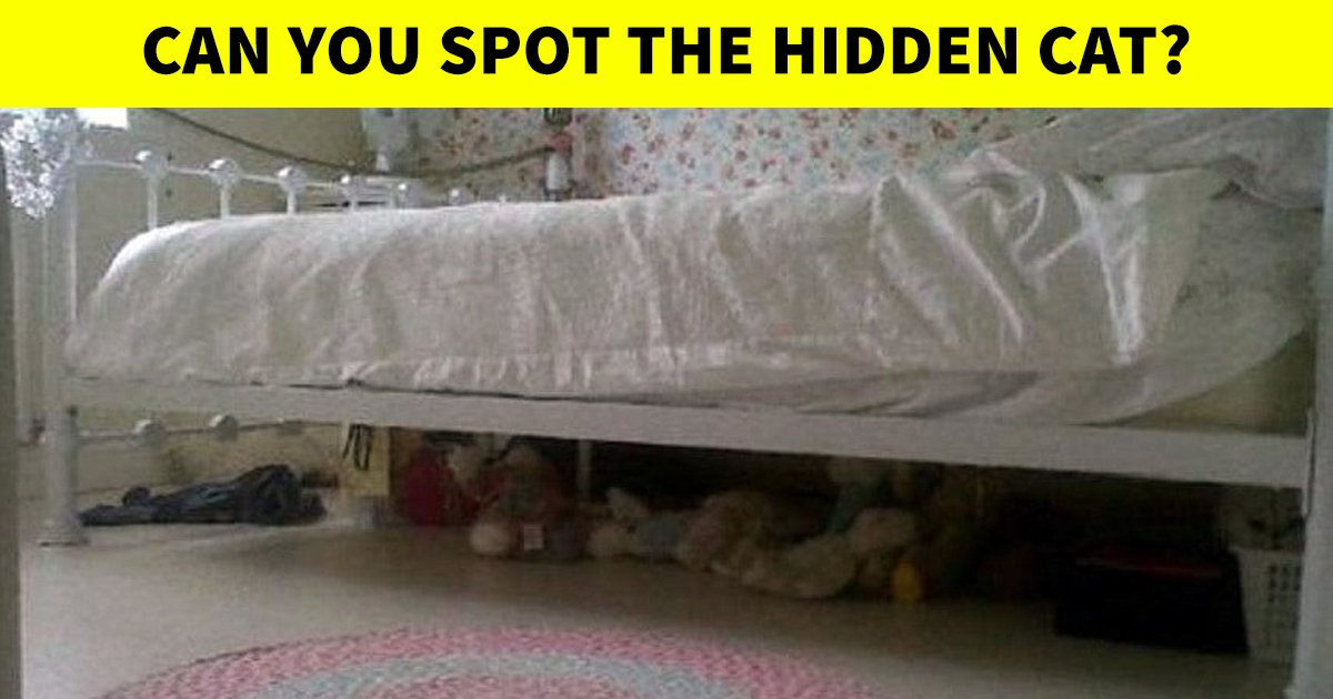 q2 22.jpg?resize=412,232 - 9 In 10 People Couldn't Spot The Hidden Cat In This Graphic! What About You?