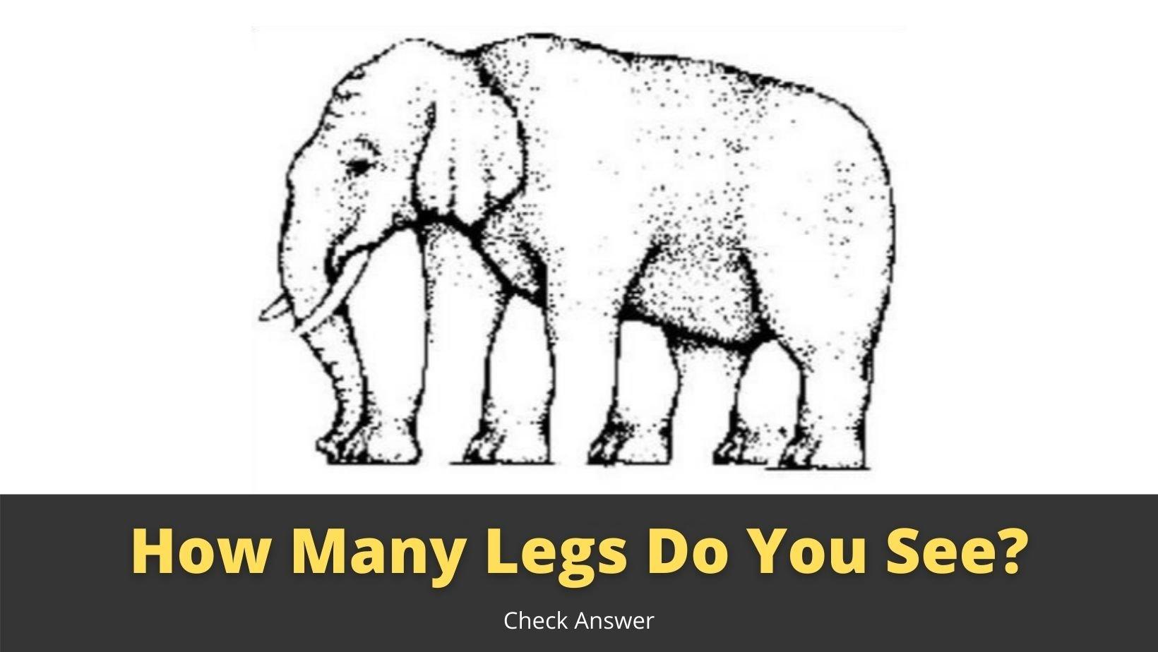 small joys thumbnail 3 6.jpg?resize=1200,630 - Optical Illusion: How Many Legs This Elephant Has?